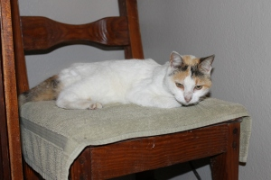 Beatrice, the cat that has been a part of camp for more than 10 years, died on Tuesday morning.