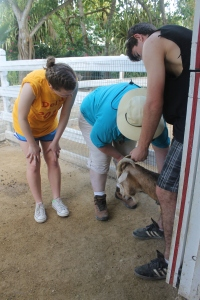 ...providing TLC to our animals at the Centre (vet tech Jackie and her assistants were such a blessing to the animals)...