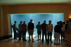 The Dig at Atlantis.