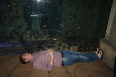 Andrew sizing himself up to the very large grouper in the aquarium