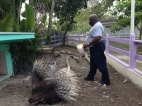 Garnett braving the porcupine pen to feed them