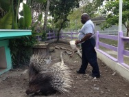 Garnett braving the porcupine pen to feed them
