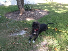We have been dog sitting this adorable mutt. Gracie belongs to some missionary friends of ours.